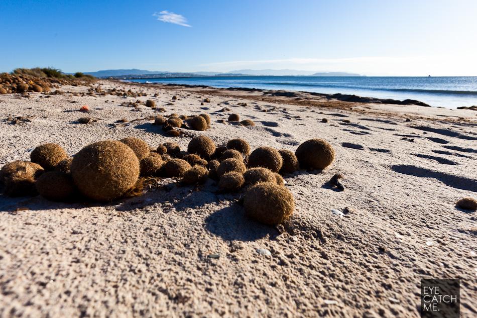Fotos einzelner kugeln am strand auf Sardinien