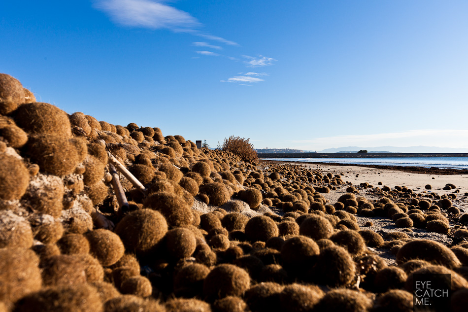 Fotos eines Hügels aus Seegras Kugeln auf Sardinien des Fotographen Trettenbach