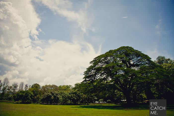 Das Foto zeigt eine große Wiese und einen schönen Baum vor dem Hellfire Pass Museeum